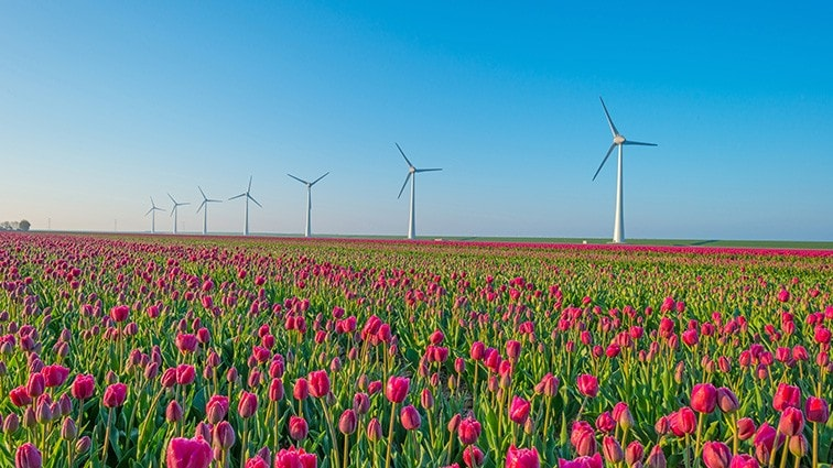 DSM operates on 100% renewable purchased electricity in the Netherlands