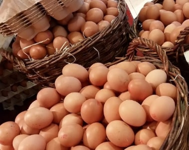 Discover DSM's guide to improved egg quality