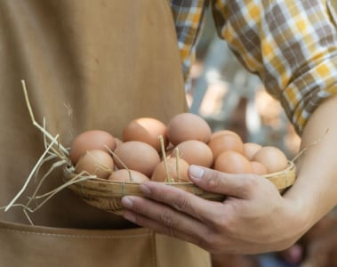 DSM partners with International Egg Commission to support sustainable egg production