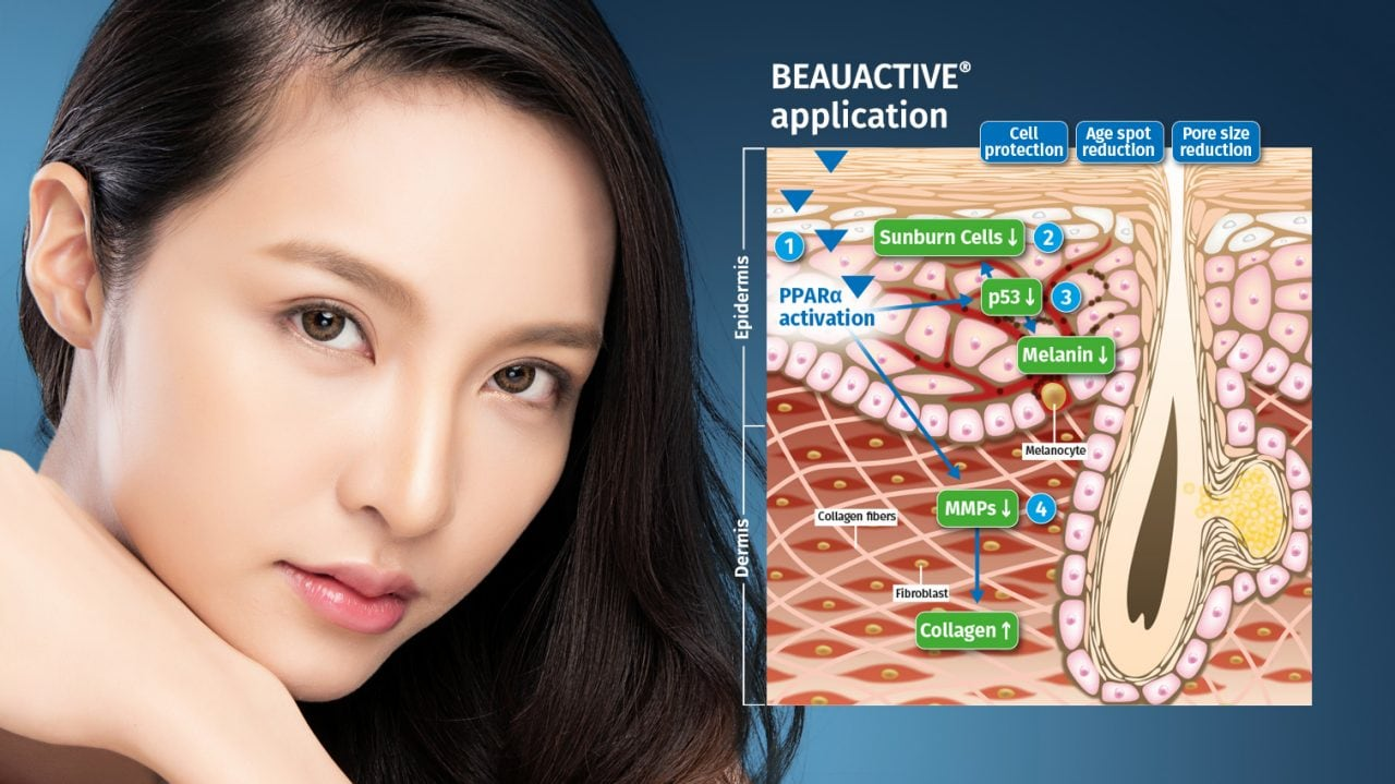 The mode of action of the natural skin care ingredient BEAUACTIVE®